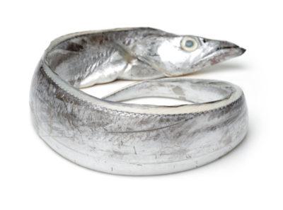 Bandfisch